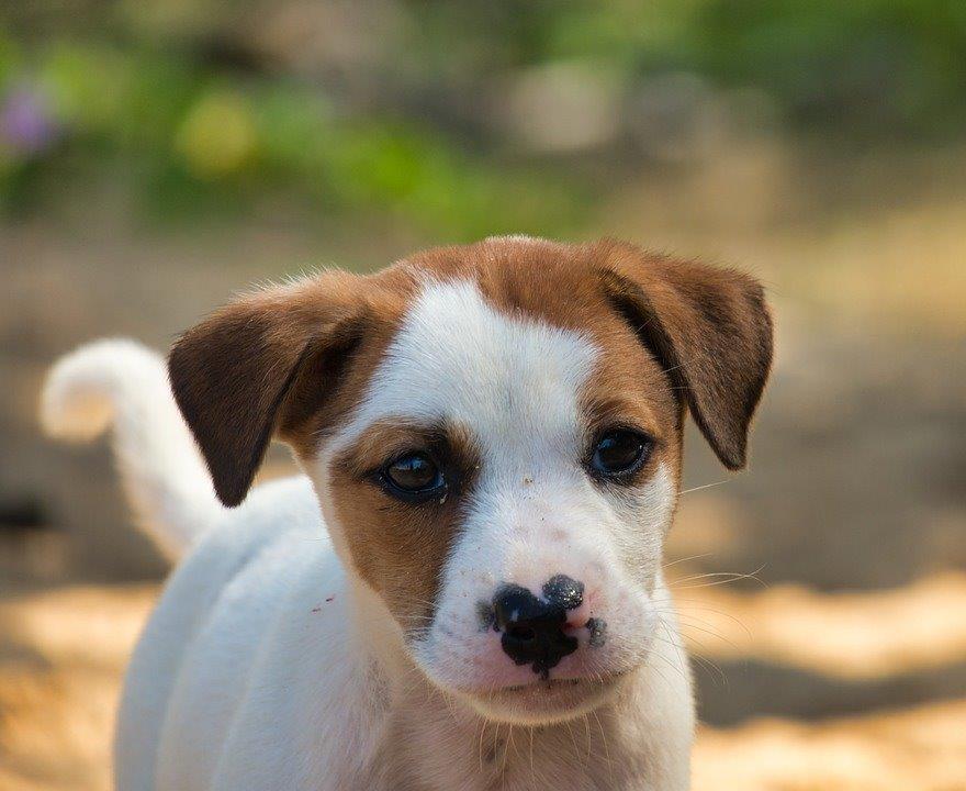 EM w hodowli i pielęgnacji psów