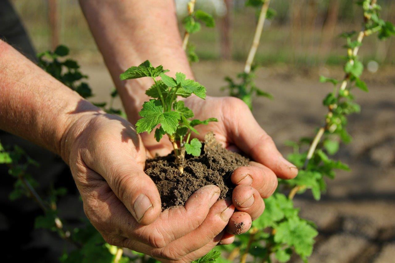 Mikroorganizmy mogą nas wspierać w przeciwdziałaniu suszy
