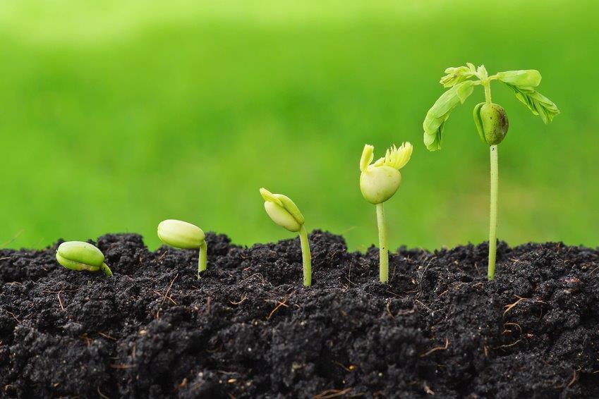 Zadbaj o pierwszy etap budowania plonu z EM Multi Grower!