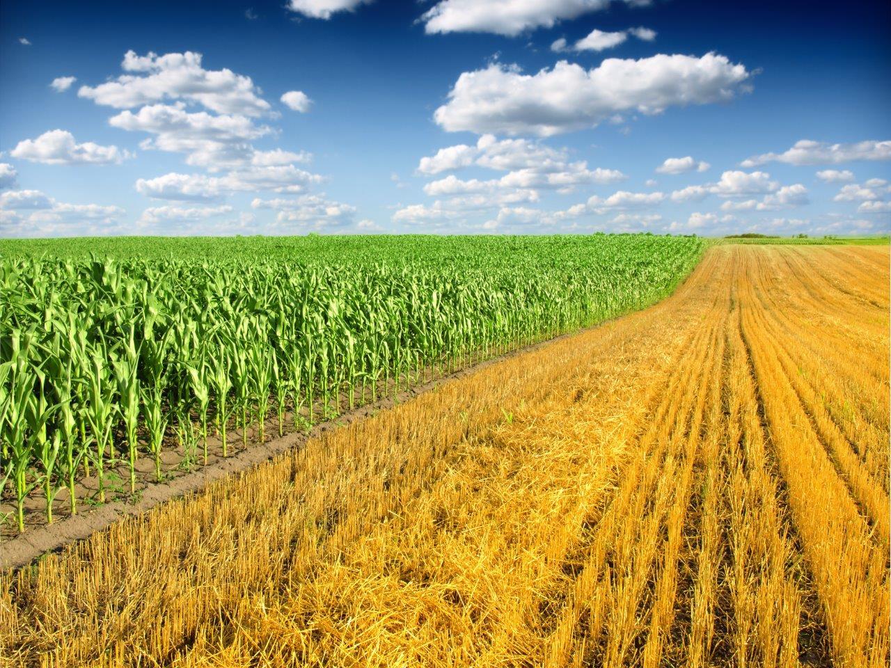 Zrównoważone zarządzanie ziemią uprawną – rozkład resztek pożniwnych