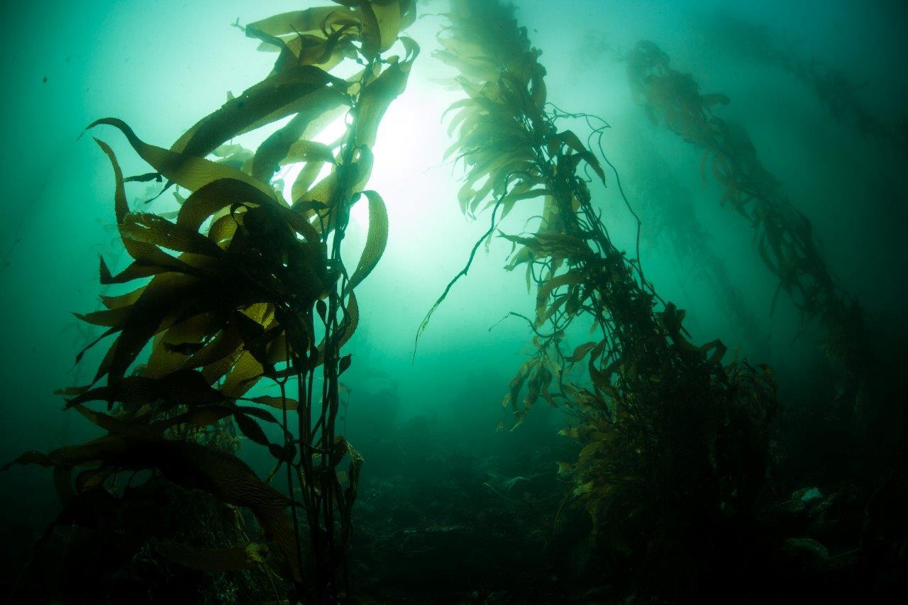 Hodowla ryb z zastosowaniem Efektywnych Mikroorganizmów