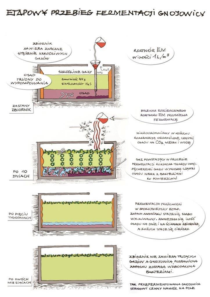 Schemat fermentacji gnojowicy z EM